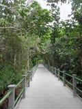 Starr Thomas Memorial Boardwalk em Bailey Homestead Preserve foto de stock royalty free
