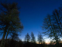 Starred night in the forest with tree and stars and sunrise. Sunrise in the forest with low light and stars stock photo