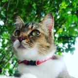 Starren der Katze lizenzfreie stockbilder