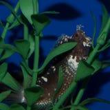 Starry Blenny Royalty Free Stock Photos