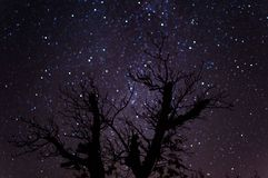 Starry fall night. Walnut tree after harvest stock images