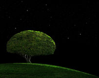 Starry Night. Lone tree on a grassy hill under a starry night sky Royalty Free Stock Photos