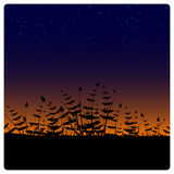 Starry night. Plant silhouettes at night. EPS 8.0 file available Royalty Free Stock Photos