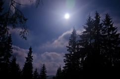Starry night and dark forest. Carpathisn Mountains stock photo