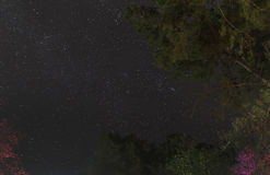 Starry night motion sky with trees. In the foreground Royalty Free Stock Images