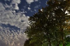 Starry night, moving clouds, and standing trees Stock Images