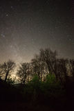Starry night over forest royalty free stock image