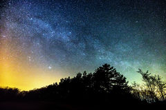 Starry night over forest Royalty Free Stock Images