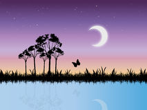 Starry Night Scene in Swamp Vector. Vector landscape image of a starry night in marshlands vector illustration