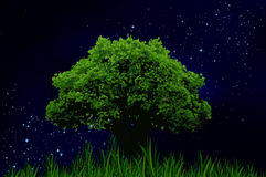 The starry night sky and lonely tree Royalty Free Stock Images