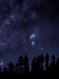 Starry night sky over the forest. Night scene with forest and clear starry sky above Stock Photo