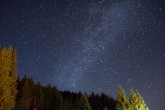 Starry night sky over pine forest. In summer Stock Photo
