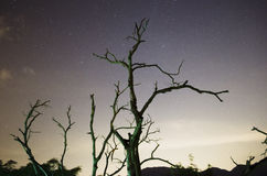 Starry Night Sky with Withered trees Stock Images