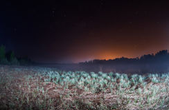 Starry night, the stars over the lake, green grass illuminated by a flashlight Stock Photo
