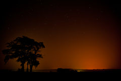 Starry night with a tree Royalty Free Stock Photo