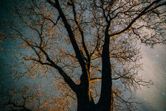 Starry night through tree limbs. Starry and cloudy night sky through bare tree limbs Stock Photos