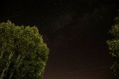 Starry skies against tree tops Royalty Free Stock Photos