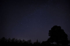 Starry sky. Long-exposure night shot of a clear starry sky with a silhoutte of a treeline at the bottom Stock Photos