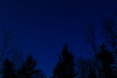 Starry Sky. Trees silhouetted against a star filled sky Royalty Free Stock Images