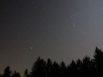 Starry sky above fir forest. A starry night sky above tree silhouettes of a fir forest royalty free stock photography