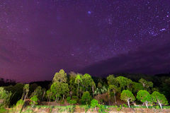 Starry sky above tropical trees Royalty Free Stock Photography