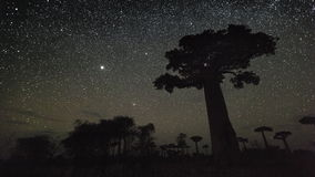 Starry sky and baobab trees stock video footage