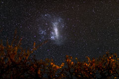 The starry sky and the majestic Big Magellanic Cloud, outstandingly bright, captured in Africa. Acacia branches and leaves in the Royalty Free Stock Image
