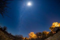 Starry sky, Milky Way arc and moon, captured from the Kalahari Desert in Botswana, Africa. Moonlight illuminating the landscape an. D baobab trees Royalty Free Stock Photos