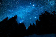 Starry sky in the night forest. The bright starry sky in the night forest Stock Image