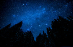 Starry sky in the night forest