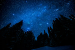 Starry sky in the night forest. The bright starry sky in the night forest Stock Images