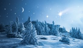 Starry sky over winter forest stock photo