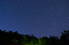 Starry sky over the wood Royalty Free Stock Photos