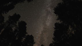 Starry sky through tree canopy stock footage