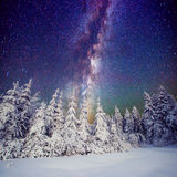 Starry sky and trees in hoarfrost. Carpathians, Ukraine, Europe Stock Image