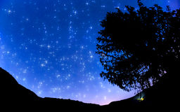 Starry sky. In the village Royalty Free Stock Image