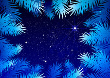 Starry sky in the winter forest. Spruce branches frosty pattern Royalty Free Stock Photos