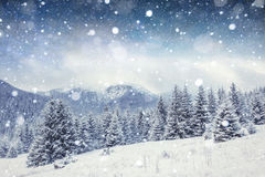 Starry sky in winter snowy night. Carpathians, Ukraine, Europe Stock Photo
