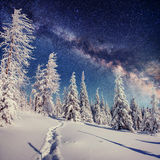 Starry sky in winter snowy night. fantastic milky way Royalty Free Stock Image