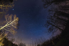 The starry sky from woodland, ultra wide fisheye view Royalty Free Stock Photography