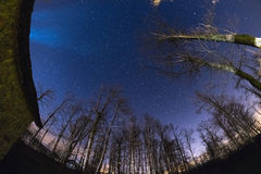 The starry sky from woodland, ultra wide fisheye view Stock Photos