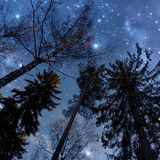 Starry sky. When you look up, you see trees and lot of Stock Photos