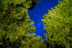 Stars Above the Tree Tops. A low angle view of the stars seen through the tree tops Royalty Free Stock Photography