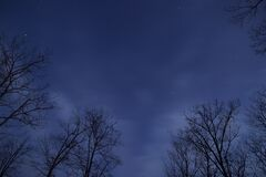 Stars in blue skies along tree tops Royalty Free Stock Image