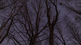 Stars Churning at Night with Tree. A time lapse tilting up to the stars and panning around stock video