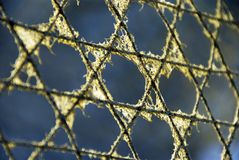 Stars of David. A fence with the Jewish star pattern Stock Photography
