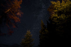 Stars in the Forest. Stars from the milky way set a backdrop for a forest at night Royalty Free Stock Photo