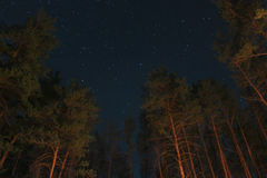 Stars in the forest Stock Photography