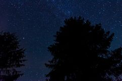 Stars moving on the sky above the trees stock video footage