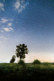 Stars at night on the field. royalty free stock images